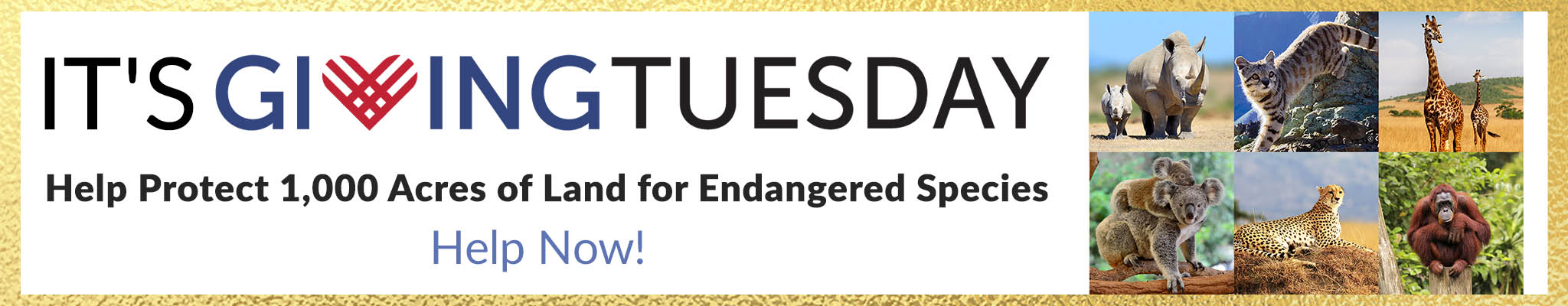 It's Giving Tuesday! Help Protect 1,000 Acres of Land for Endangered Species   Help Now