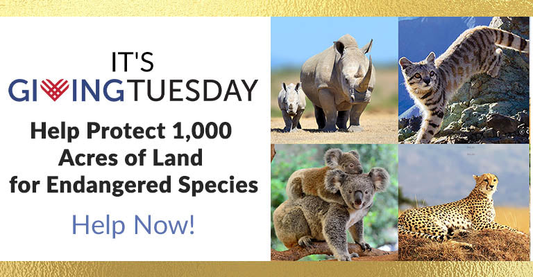 It's Giving Tuesday! Help Protect 1,000 Acres of Land for Endangered Species | Help Now