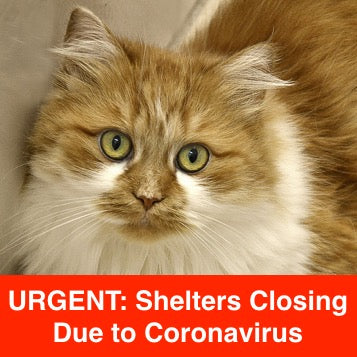 Urgent: Shelters Closing Due To Coronavirus -- Help Pets Now