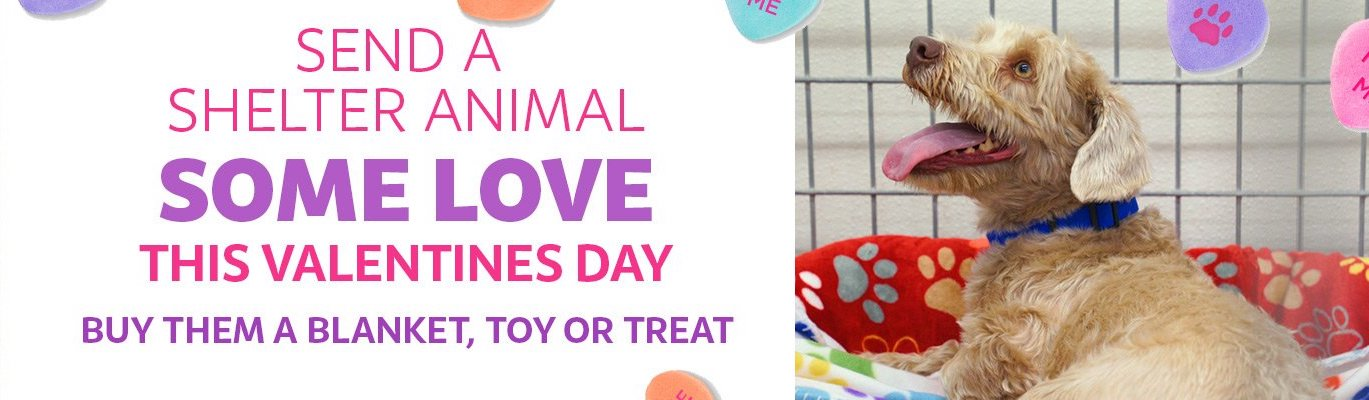Check out our Fur Baby Valentine!