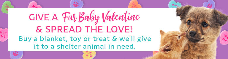 Send A Fur Baby Valentine To Help A Shelter Animal