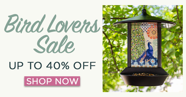 Bird Lovers Sale | Up to 40% OFF