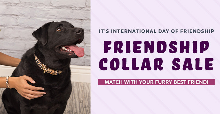 It's International Day of Friendship | Friendship Collar Sale | Match with your furry best friend!