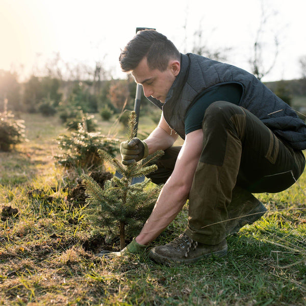 Benefit Buy - Plant A Tree In An Area That Will Make The Biggest Impact