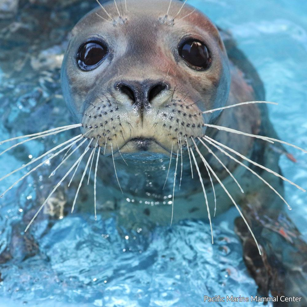 Donation - Feed A Rescued Marine Mammal