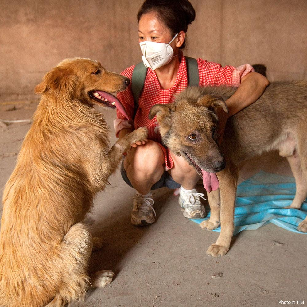 Care for Animals Rescued from the China Dog Meat Trade