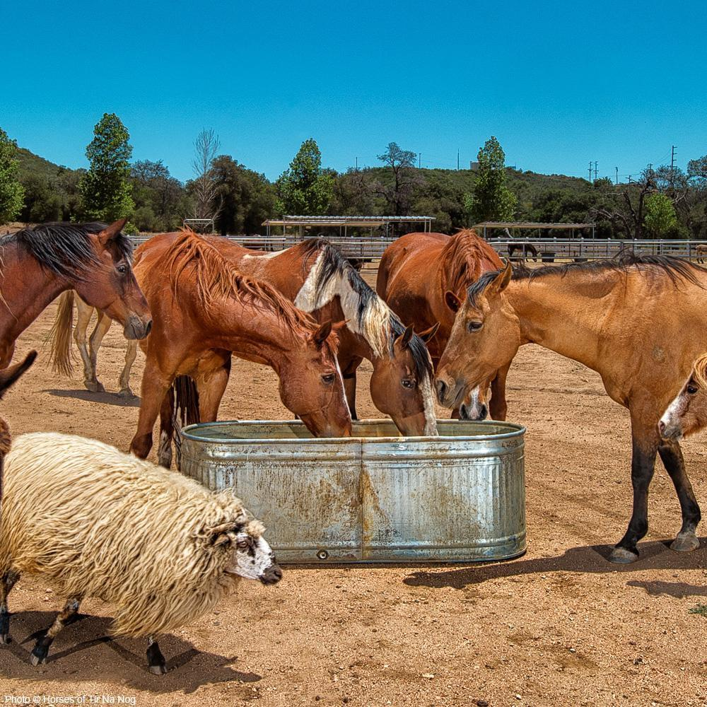 Build a Well for Horses Affected by Drought