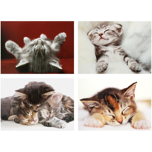 Cat Naps Notecards - Box Of 16