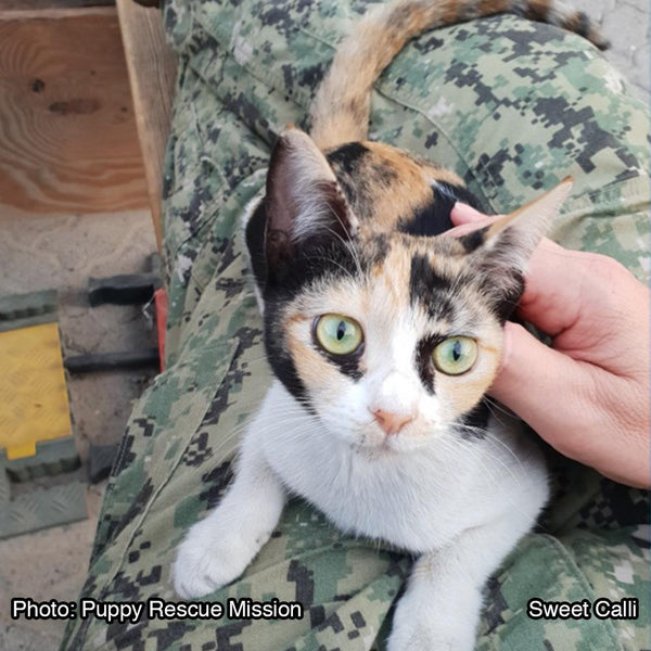 Donation - Help Deployed Soldiers Save Animals