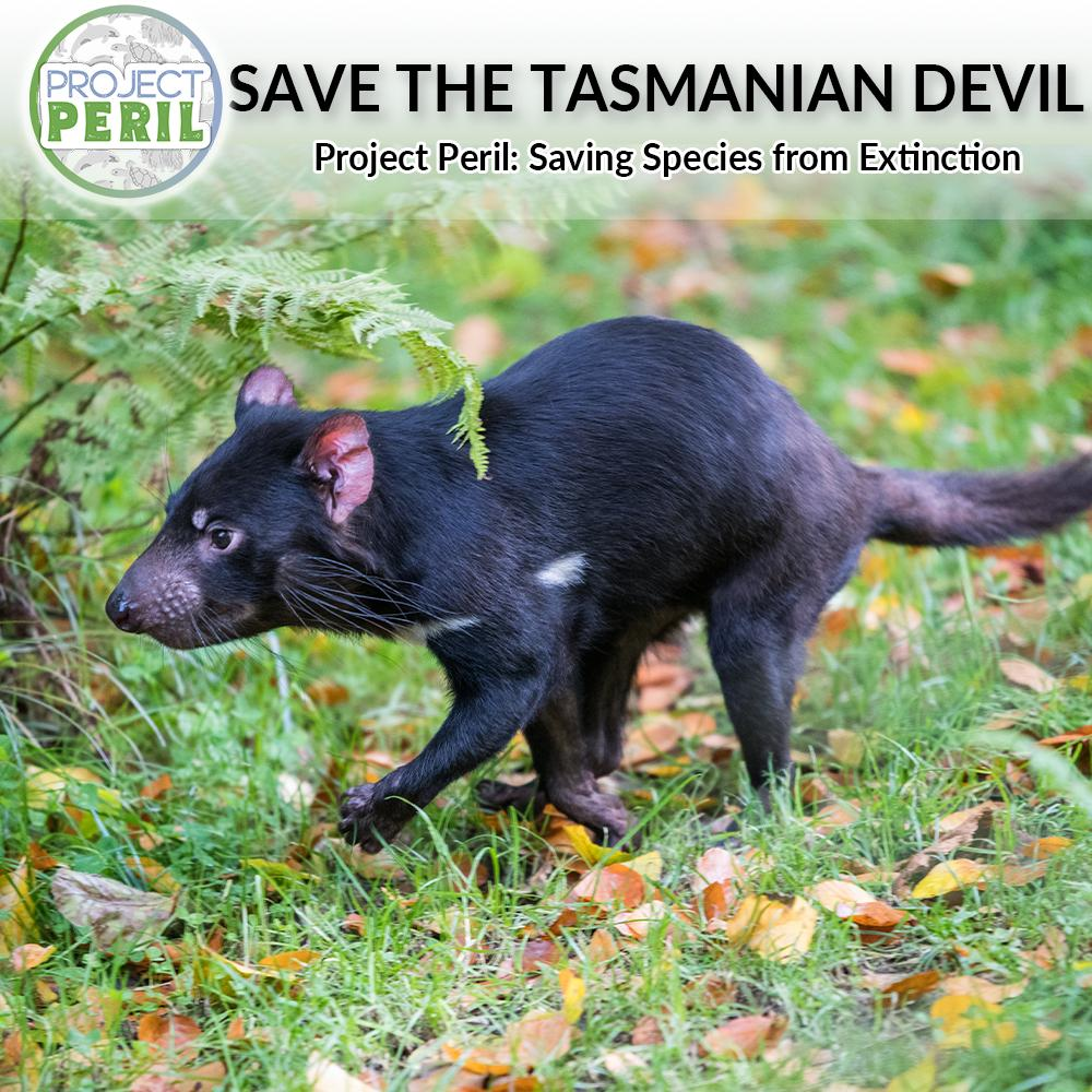 Donation - Save The Tasmanian Devil From Extinction