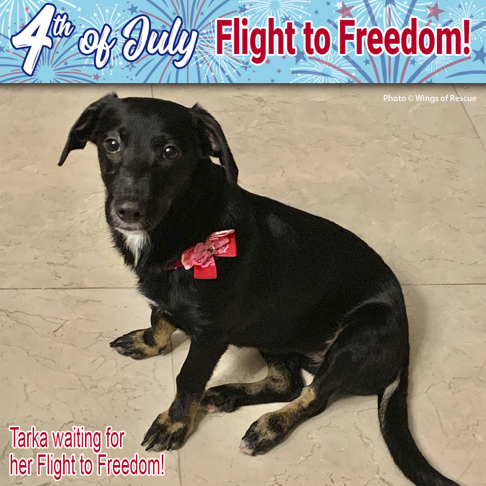 Help Fly Pets to Freedom!