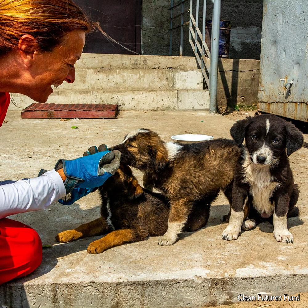Donation - Save The Dogs Of Chernobyl