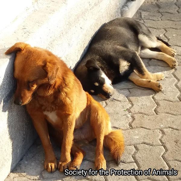 Donation - Provide Street Houses For Abandoned Dogs & Cats