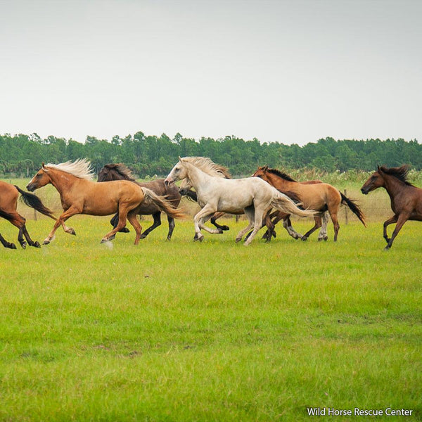 Donation - Provide Care For America's Wild Horses