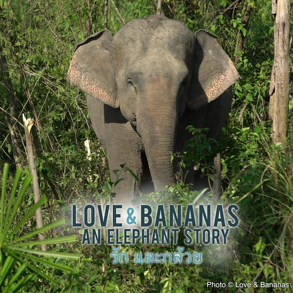 Donation - Home At Last, A 200 Elephant Rescue & Retirement Mission