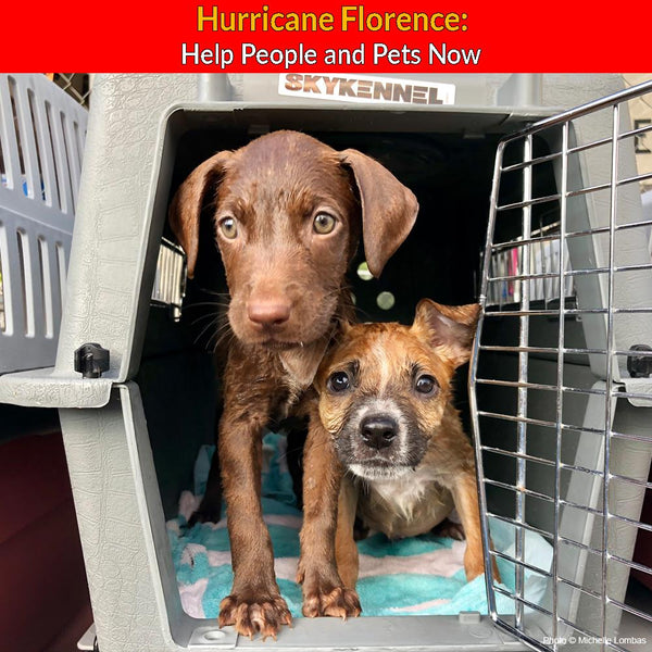 Hurricane Florence: Help People and Pets Now