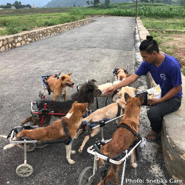 Donation - Medical Care And Adoption For Kathmandu's Street Dogs