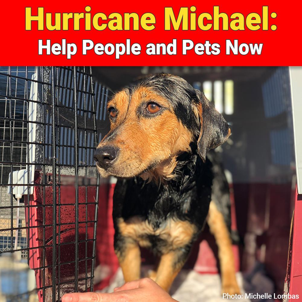 Donation - Hurricane Michael: Help People And Pets Now