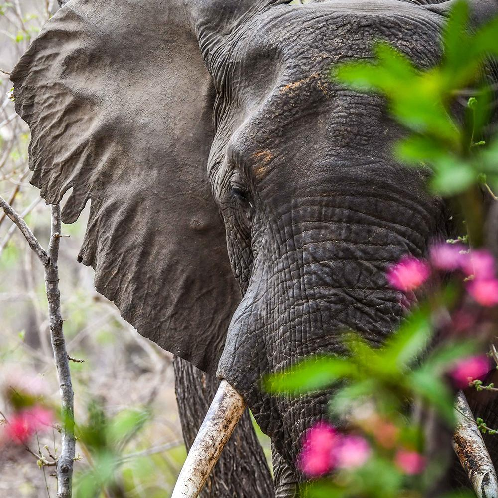Donation - Protect Vulnerable Wildlife From Poaching In Malawi
