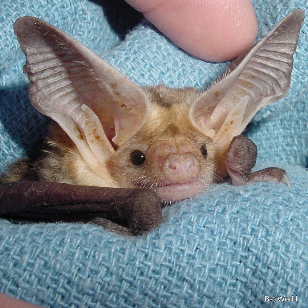 Donation - Save Injured, Orphaned And Abused Bats