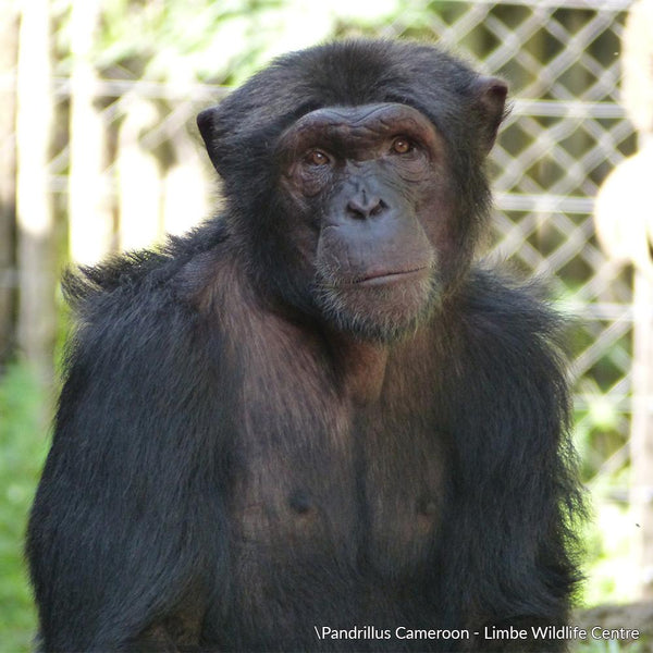 Donation - Care For Disabled Great Apes