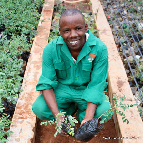Donation - Seedlings To Support Rural Kenyan Farmers