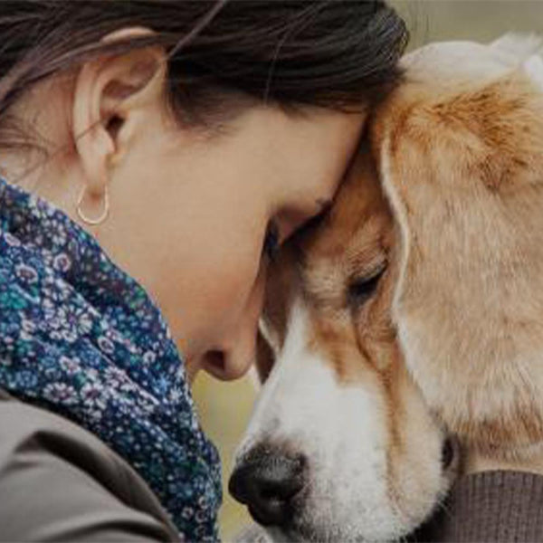 Donation - Keep Domestic Violence Victims And Their Pets Together