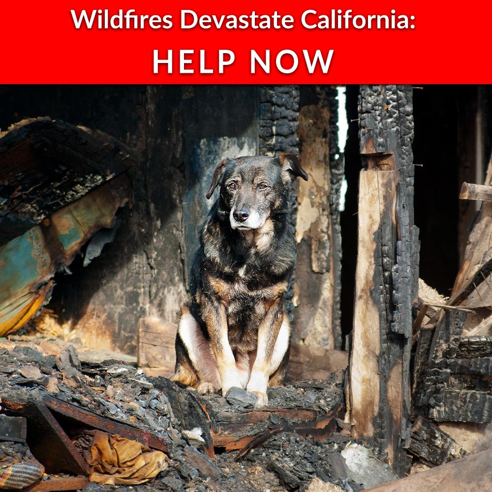 Donation - Wildfires Devastate California - Help Displaced Animals Now