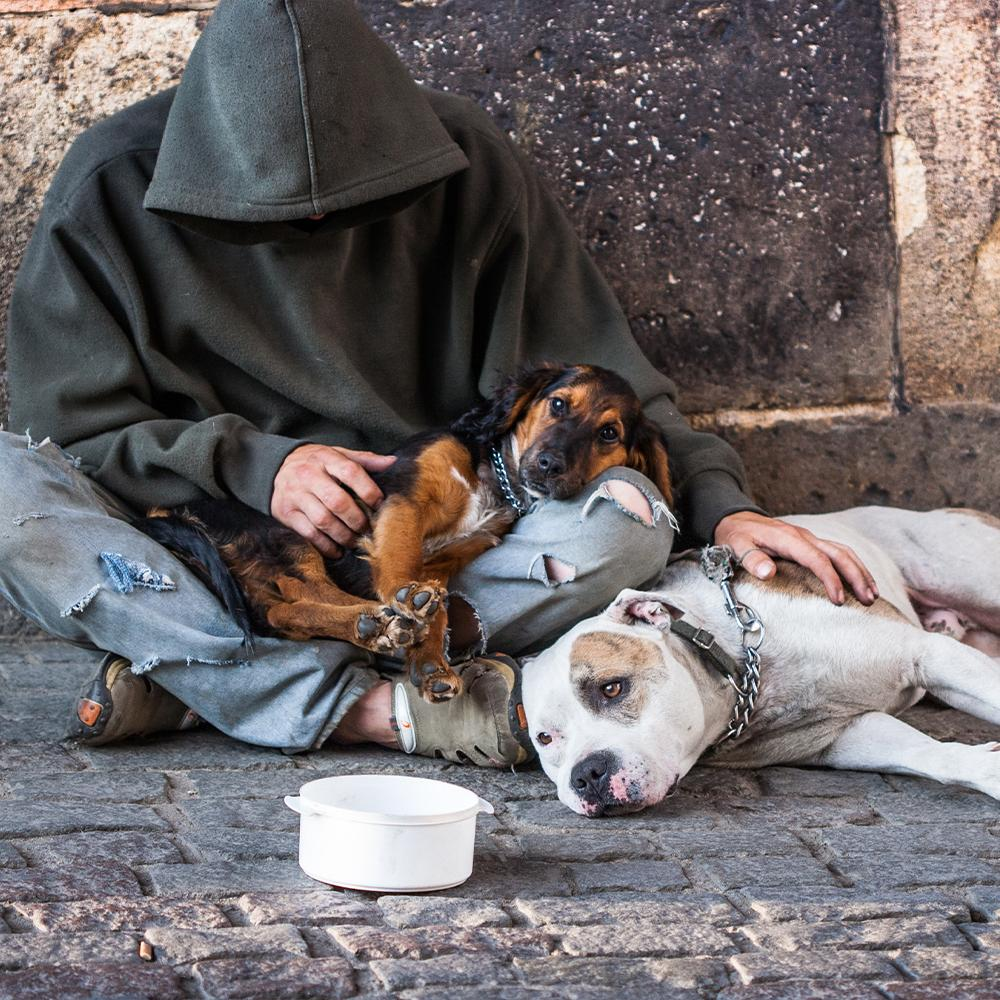 Donation - Home For The Holidays: Help Vets And Pets Stay Out Of The Cold