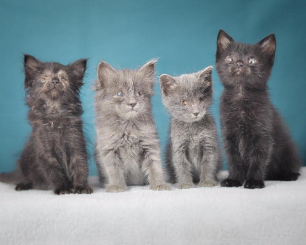 Blind Kittens Need a Second Chance