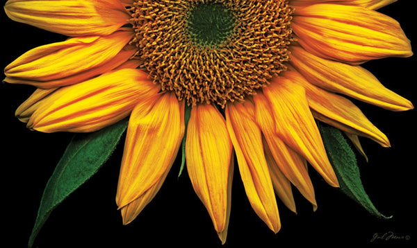 Toland Home Garden - Sunflower Door Mat