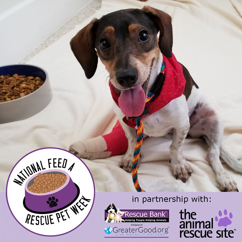 It's National Feed a Rescue Pet Week!