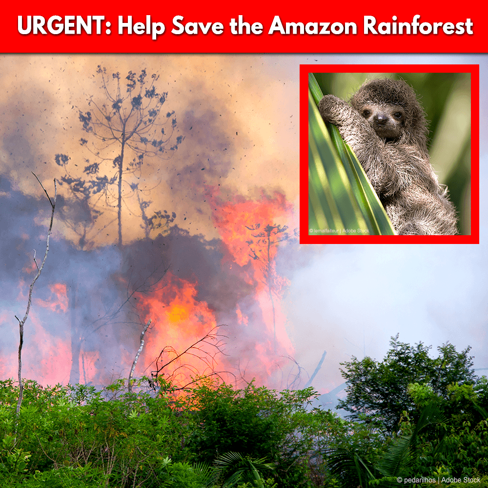 Donation - Urgent: Help Save The Amazon Rainforest