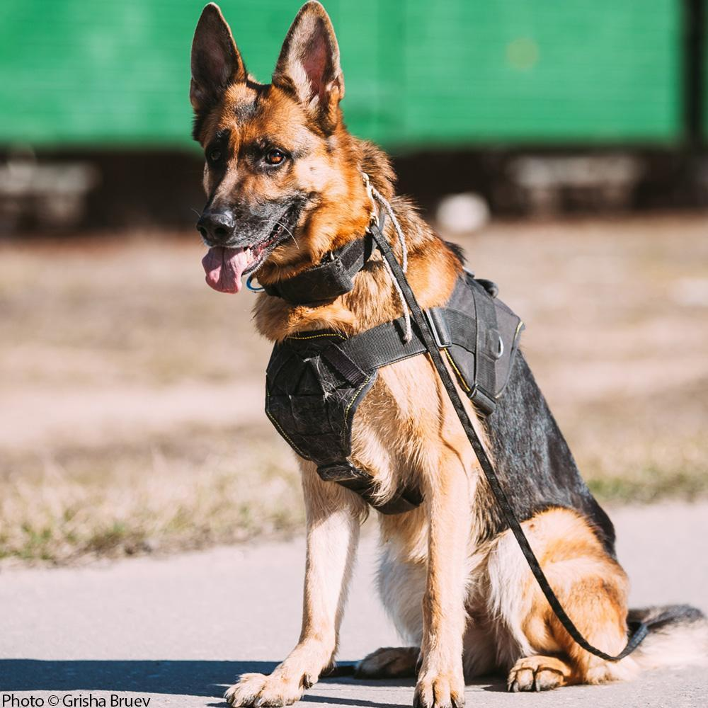 Donation - Care For Our Nation's Retired Military And Police Dogs