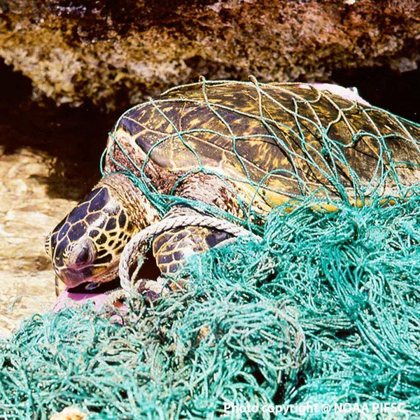 Donation - Clean Up Dangerous Plastic Pollution In Our Oceans