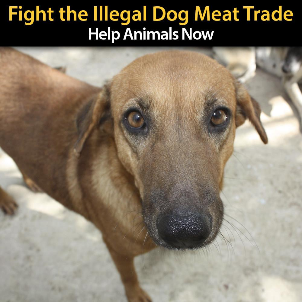 Donation - Fight The Illegal Dog Meat Trade!