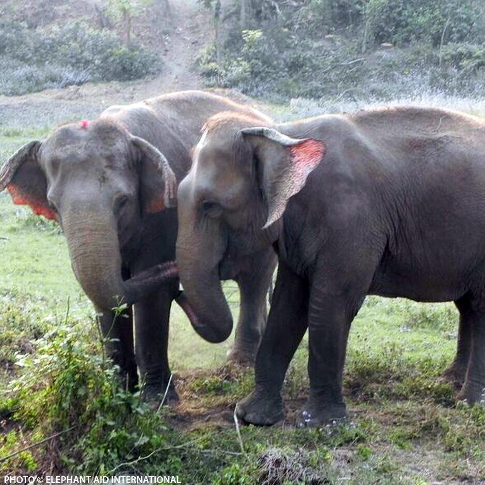 Donation - Freedom Refuge For Retired Elephants