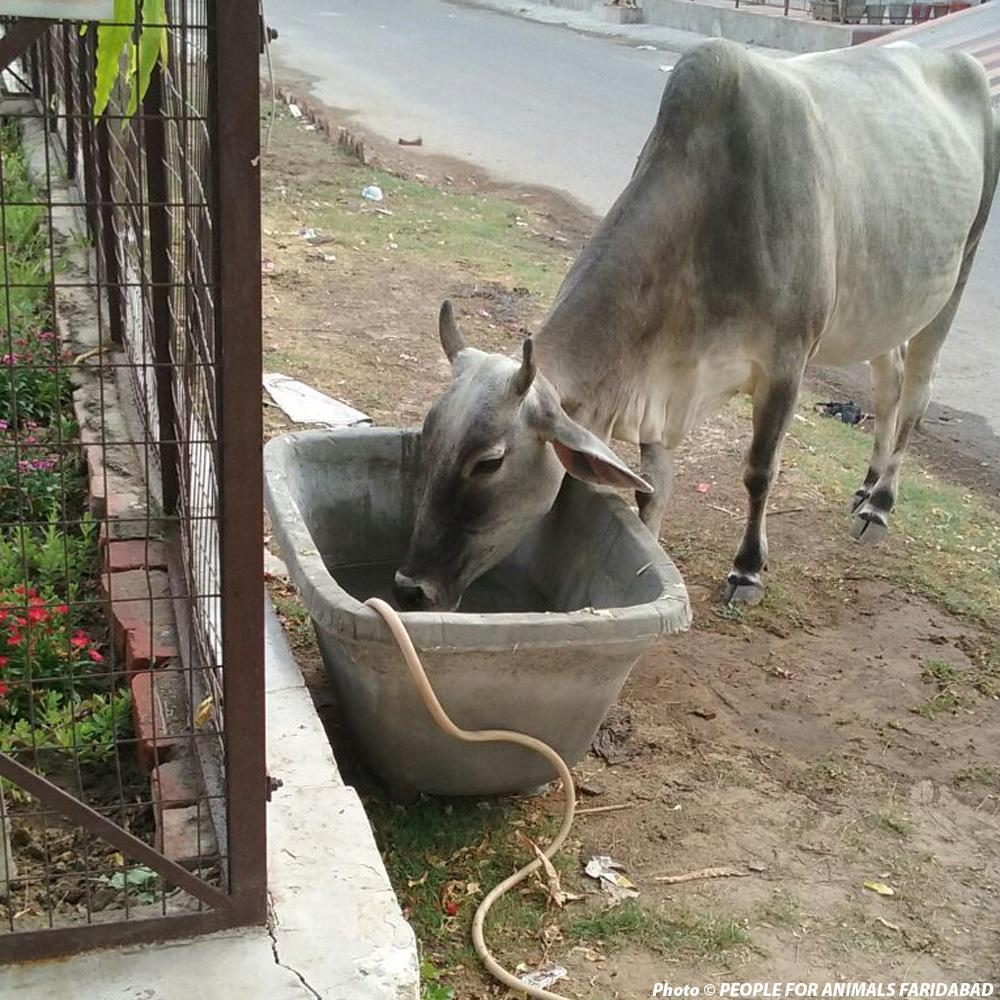 Donation - Fresh Water For Stray & Wild Animals In India