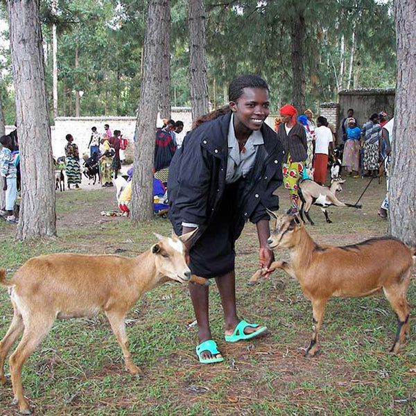 Donation - Give Goats To Rwandan Families