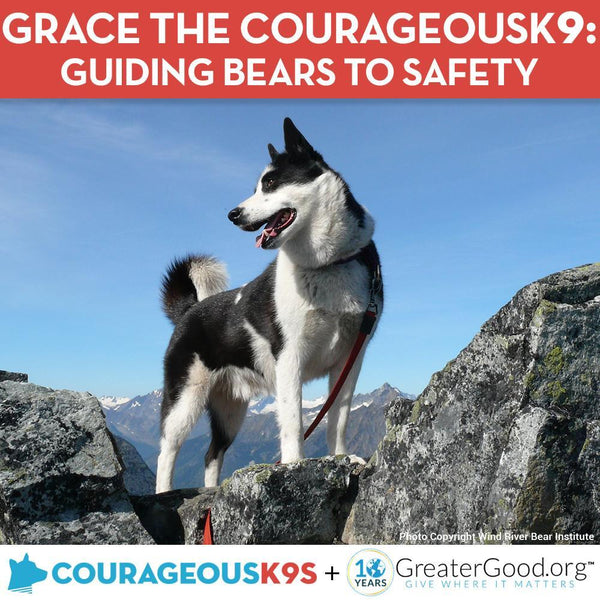 Donation - Help Grace The CourageousK9 Guide Bears To Safety