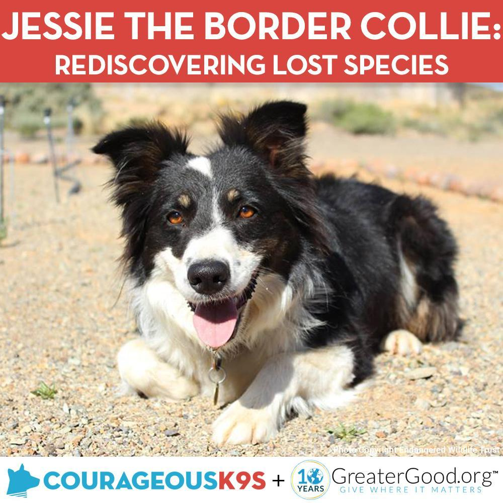 Donation - Help Jessie The Border Collie Rediscover Lost Species