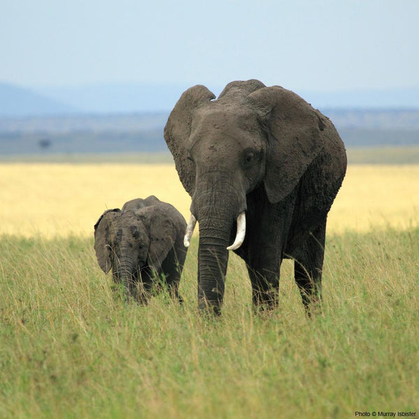 Donation - Help Protect Kenya's Elephants!