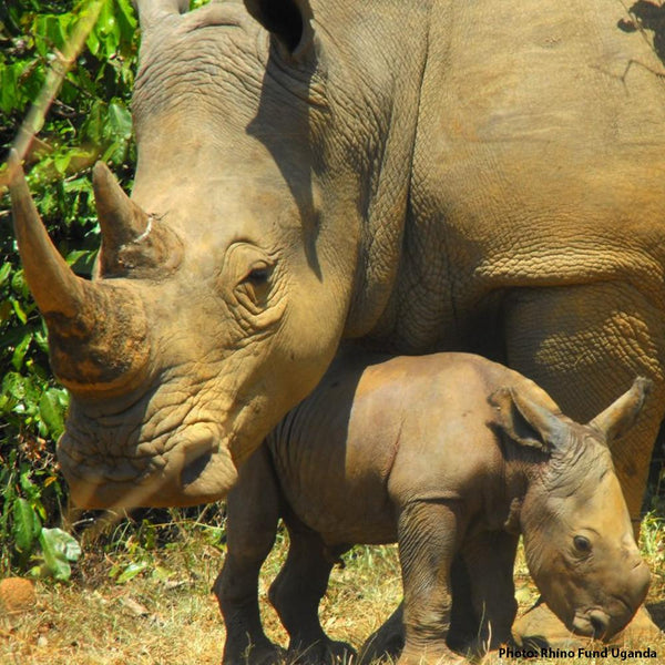 Donation - Help Protect Rhinos From Poachers