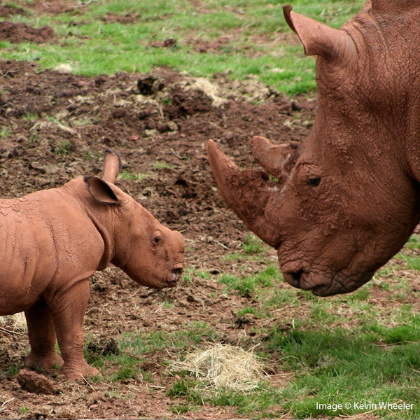 Donation - Help Provide Wilderness Education To Stop Rhino Slaughter