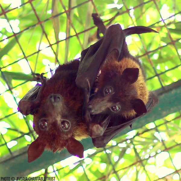 Donation - Help Rescue And Rehabilitate Bats