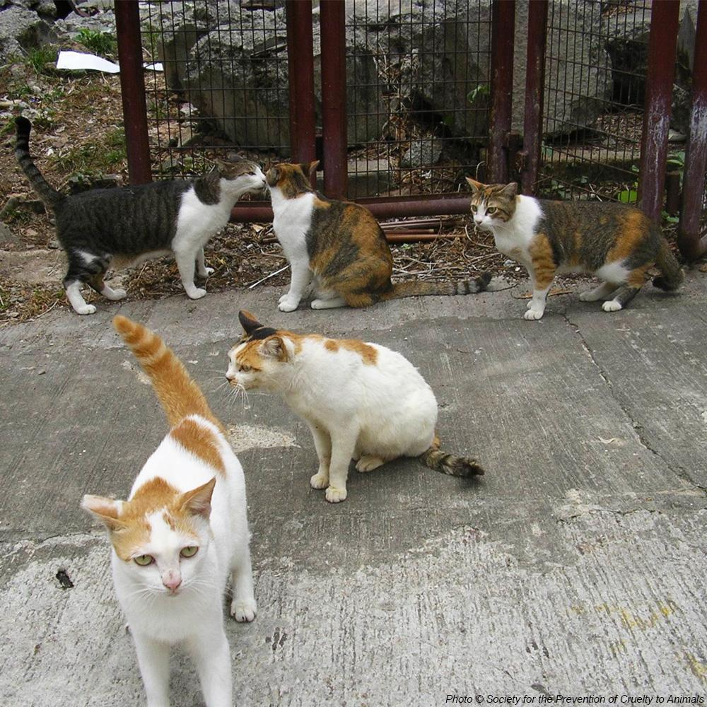 Donation - Help The Lives Of Hong Kong's Street Cats