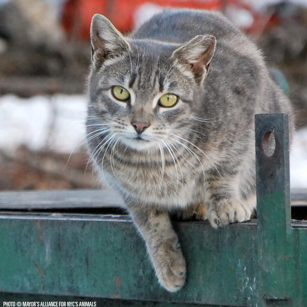Donation - Life-Saving Resources Needed For NYC's Feral & Stray Cats