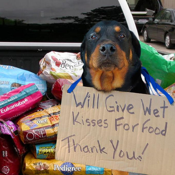 Donation - Pallets Of Pet Food For American Shelters