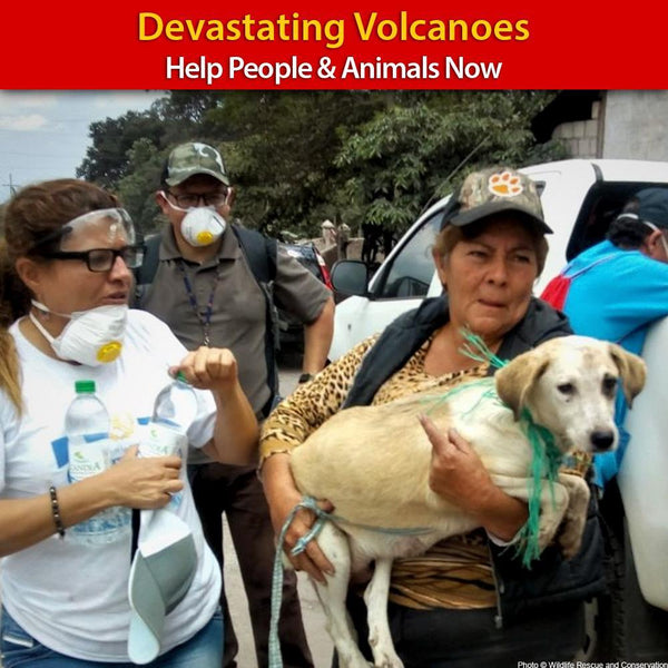 Donation - People And Pets Devastated By Volcanoes - Help Now!