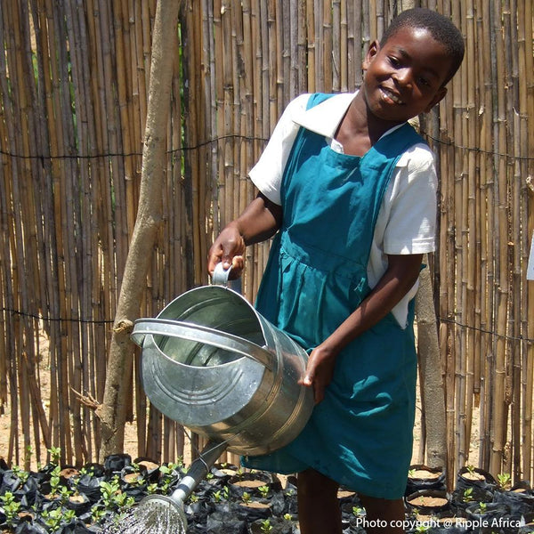 Donation - Plant A Tree, Save A Life In Malawi